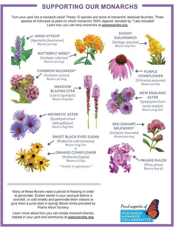 Image of 12 plants (incl. purple coneflower), with space for your logo.  Download