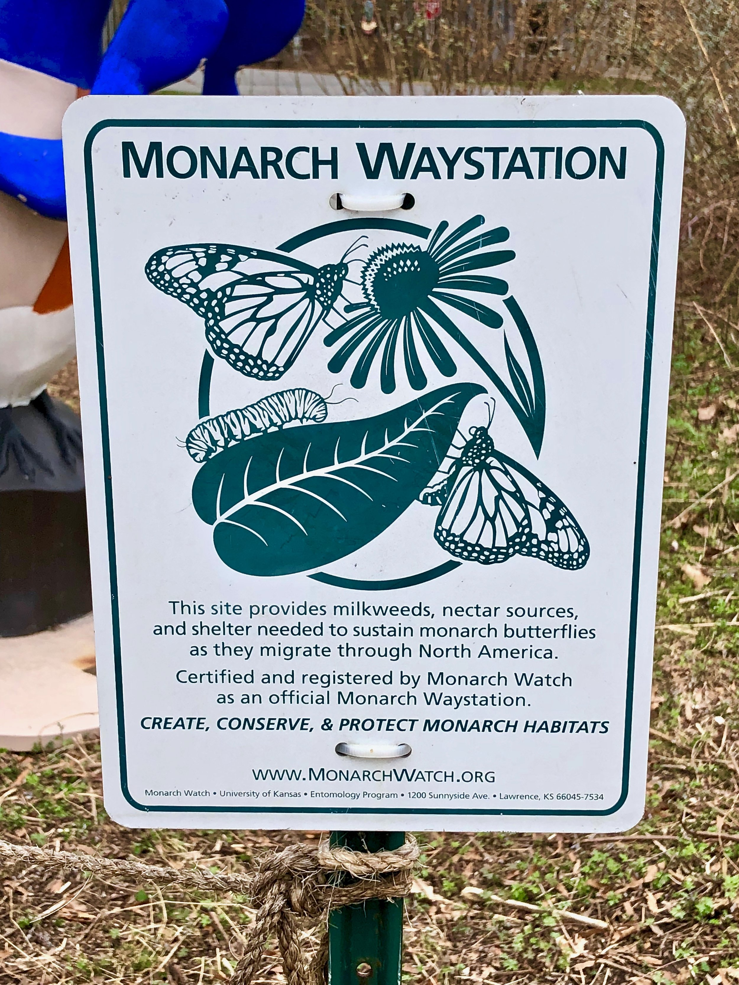 Monarch Waystation. Photo by F. Delventhal.  Download .