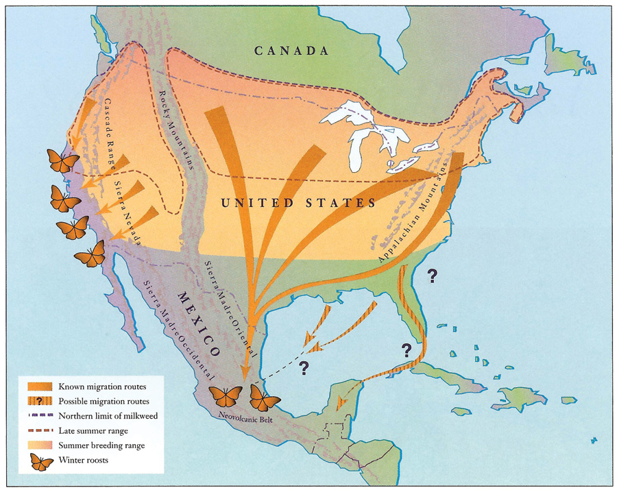 Monarch fall migration routes. Credit: U.S. Fish and Wildlife Service.  Download .