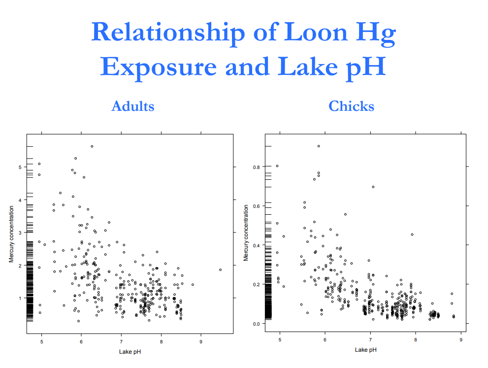 "As pH decreases (becomes more acidic) mercury concentrations increase in both adults and chicks of common loons. Graph courtesy of Mike Meyer, ""Twenty Four Years of Common Loon Research in Wisconsin"""