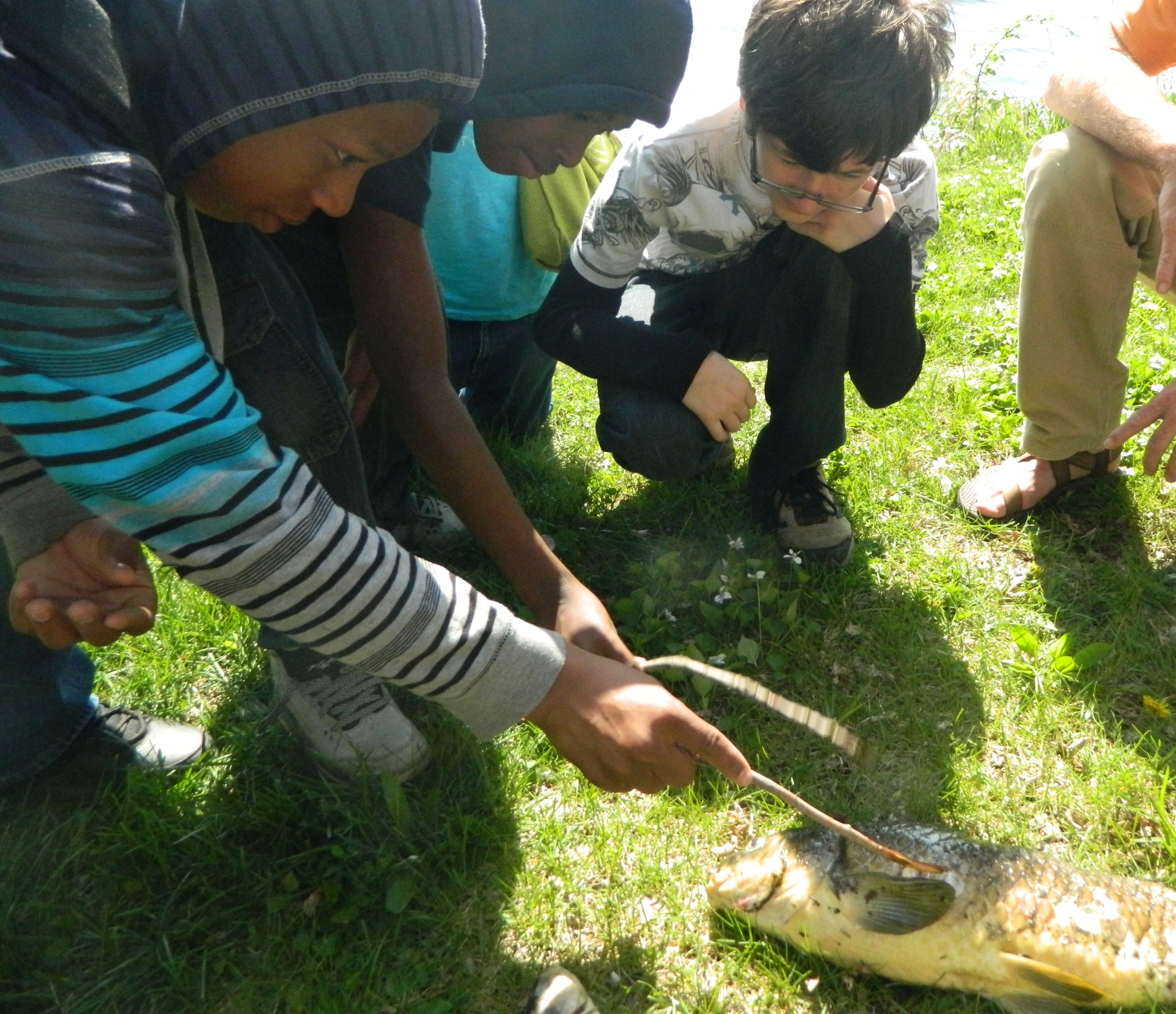 Kids use a stick to probe a dead carp found along Lake Waubesa. Photo credit: Carolyn Byers