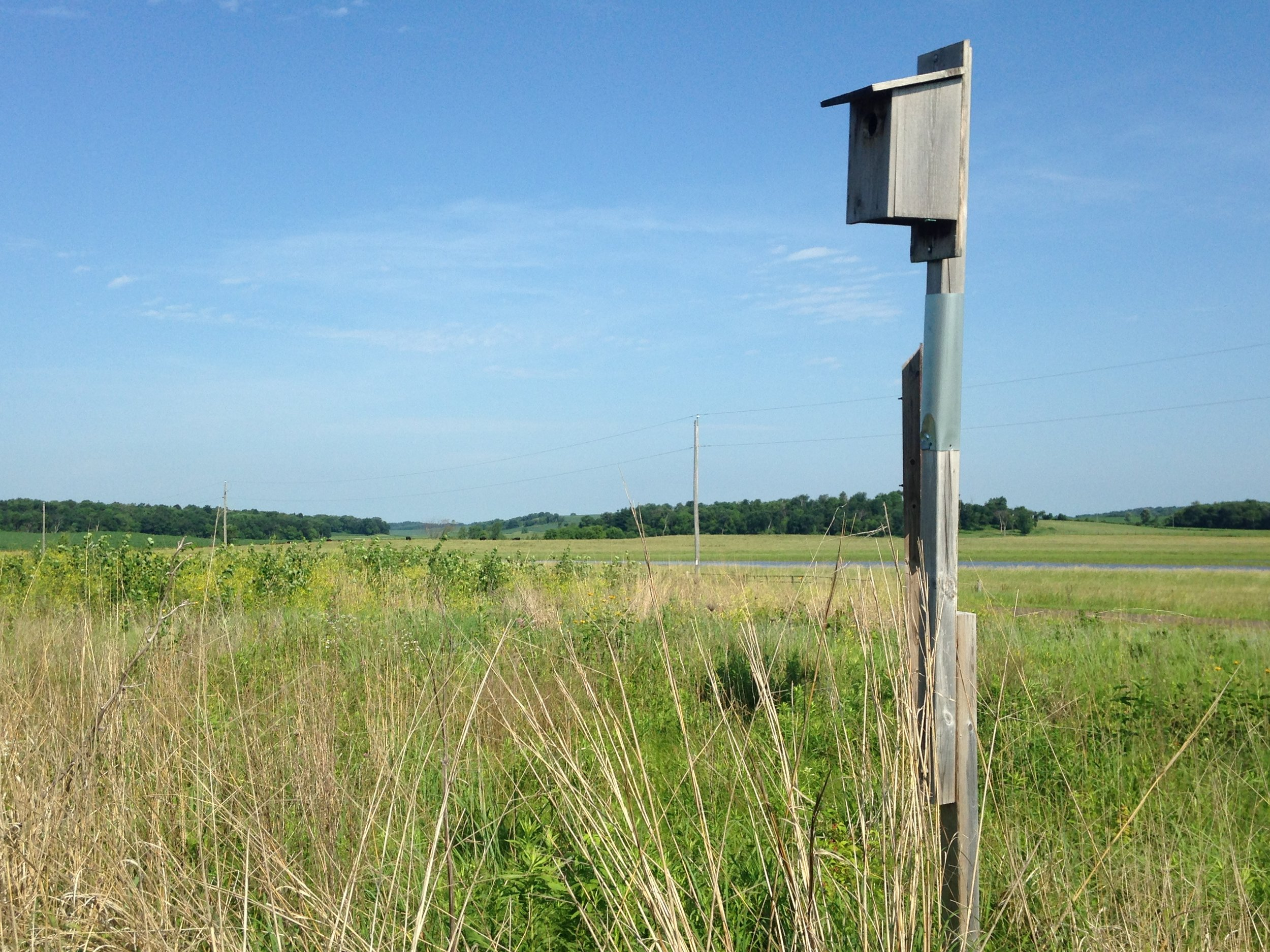 One of Madison Audubon's nestboxes sits in a grassland, filled with young kestrels. MAS Photo