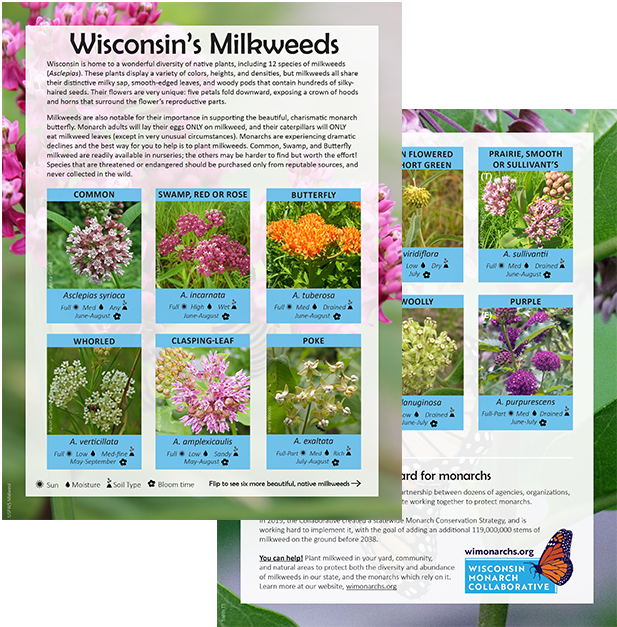 Image of Wisconsin's Milkweeds handout.  Download the full color version , or the  Printer-friendly version