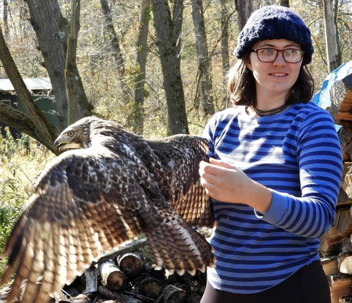 Savanna, a Cedar Grove intern, ready to release a red-tailed hawk. Photo by Dory Owen