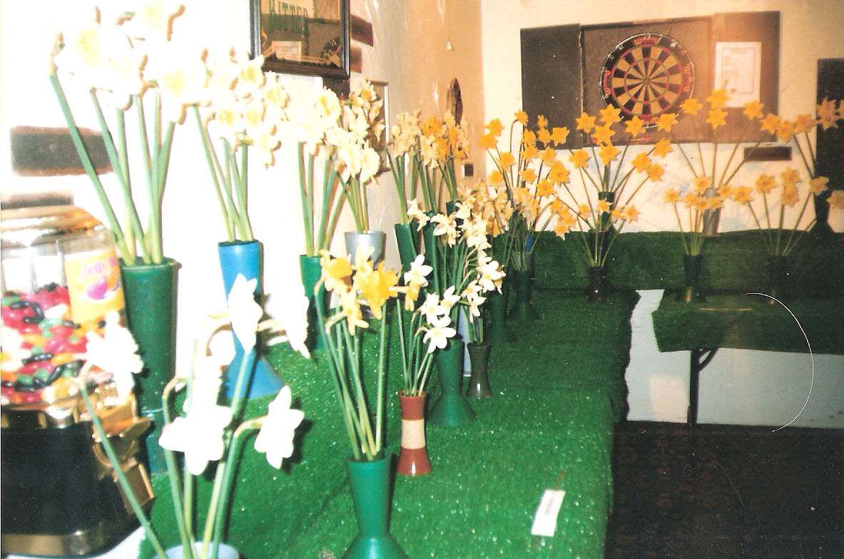 Before the club moved all its events to South Charlton (and renamed itself) for many years it held all events at the pub at Brownieside. Here are a show of daffodils in the clubs Easter show. Date unknown.