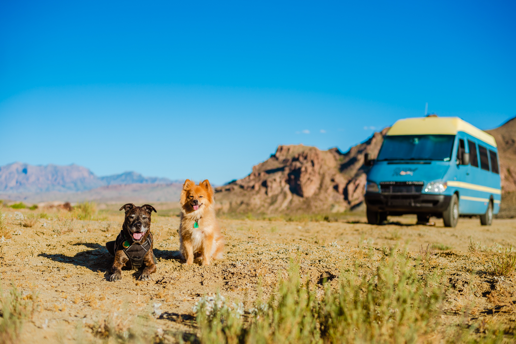 The dogs at our campsite outside of Big Bend