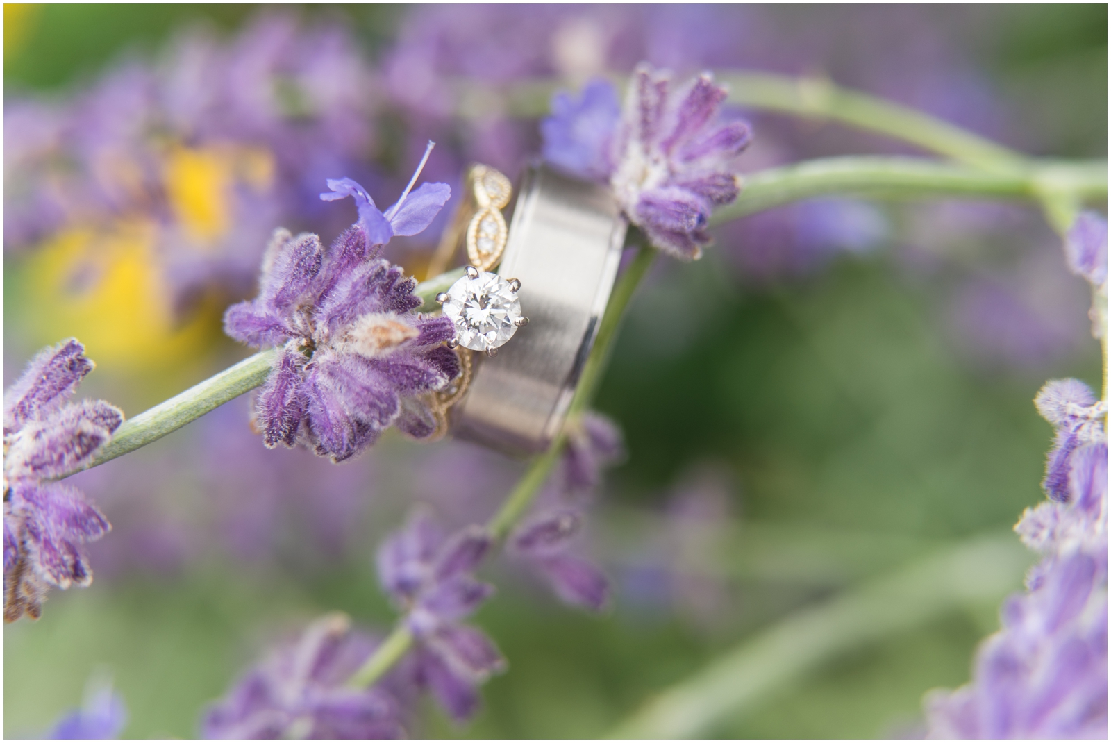 wedding rings and lavender flowers
