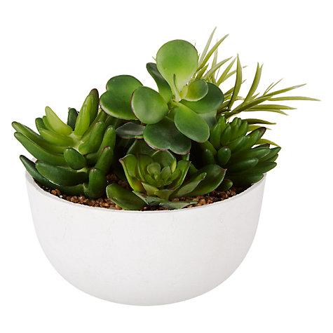Succulents £25