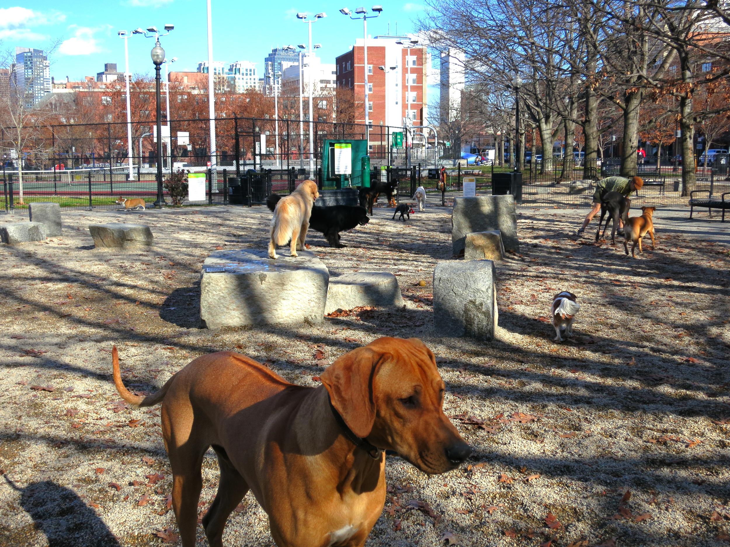 peters dog park.jpg
