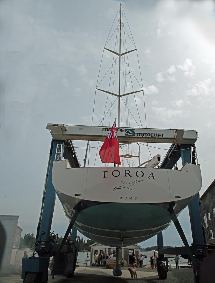 Toroa 02.jpg