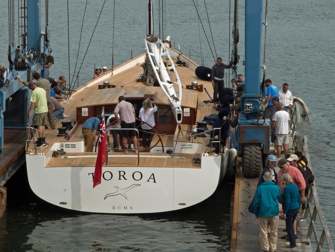 Toroa 07.jpg