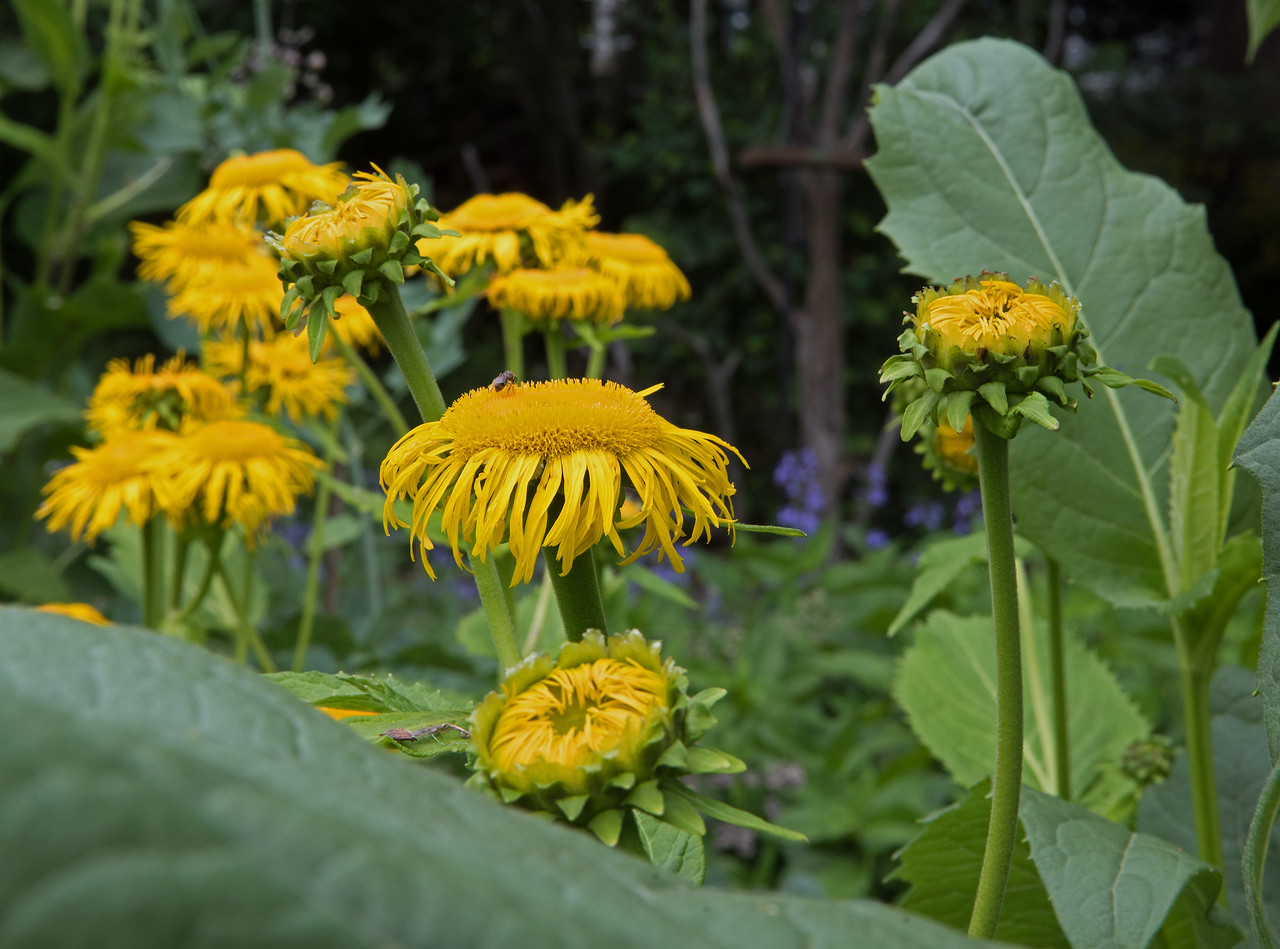 Garden 06.jpg