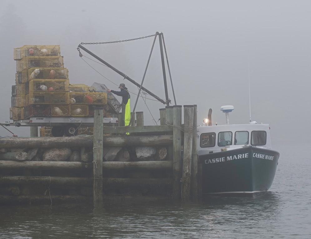 Fog-Cassie.jpg