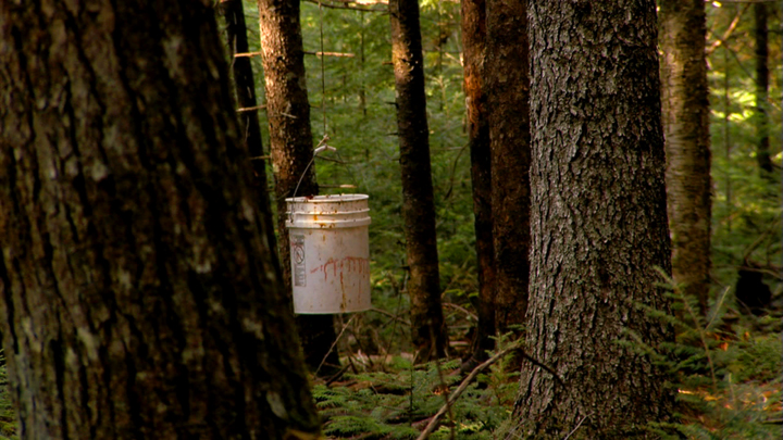 View of the bait bucket from the blind in the woods of Maine.