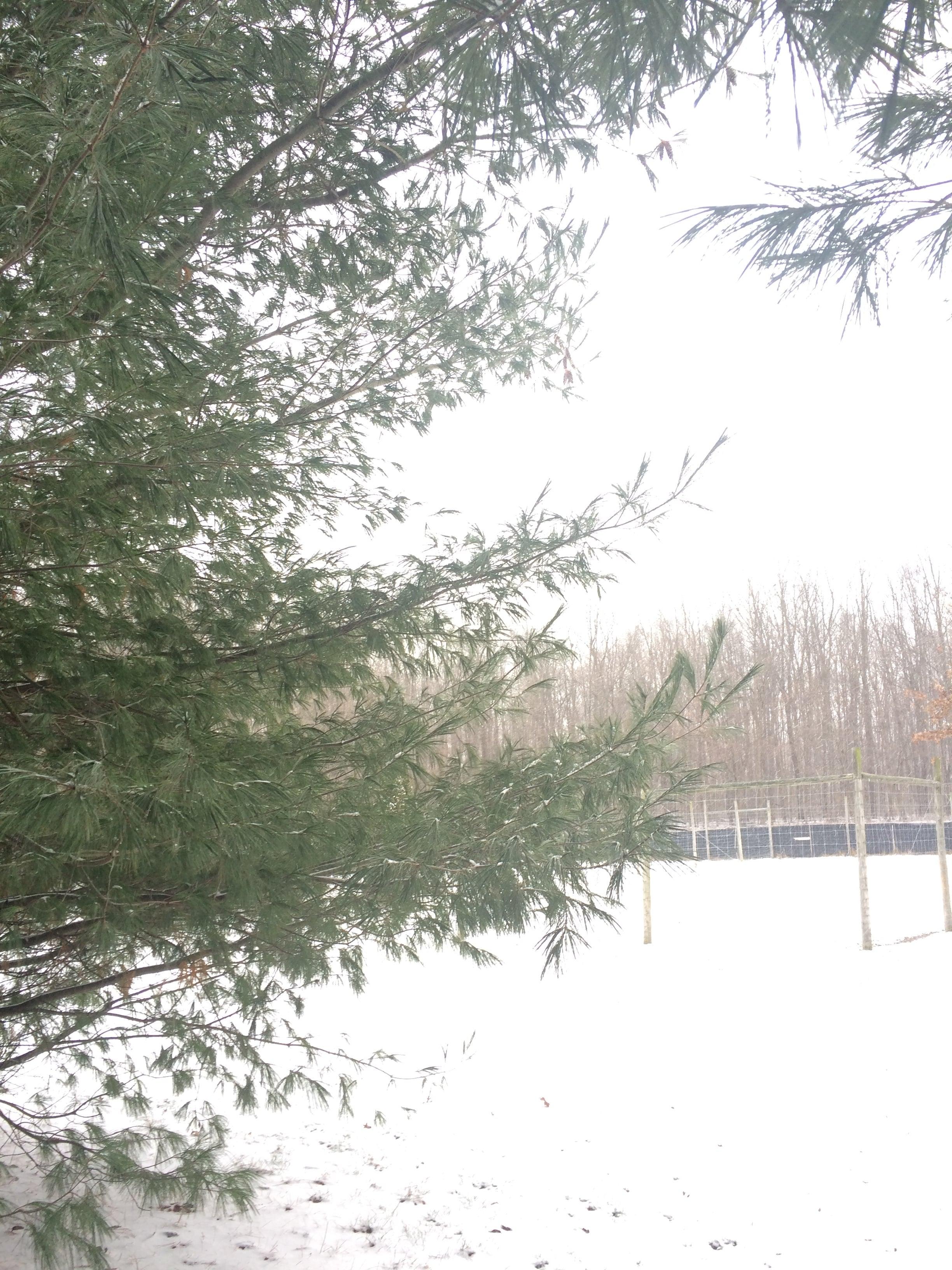 Rest | Winter Snow | loveshyla.com
