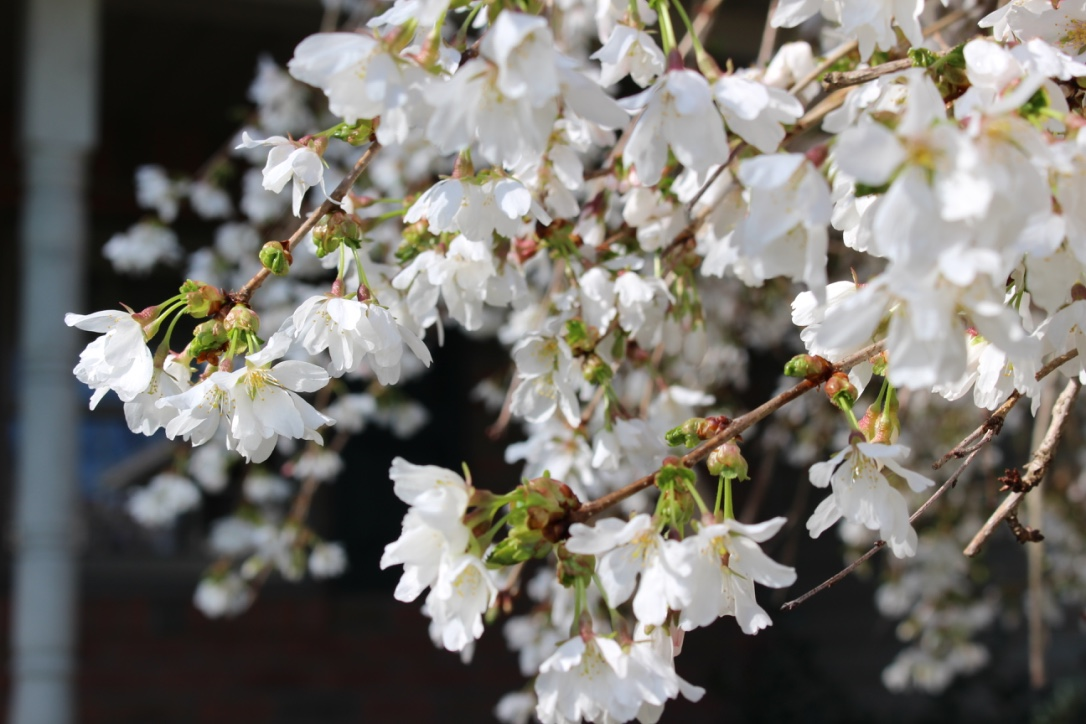 Change is Possible! | The Gradual Process of Freedom & Healing | Spring | Cherry Tree | Loveshyla.com