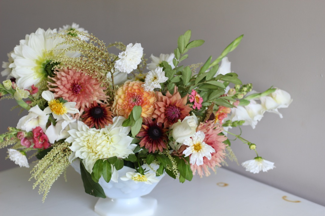 August Corals on White | Dahlia, Black-eyed Susan, double cosmos, snapdragon, zinnia