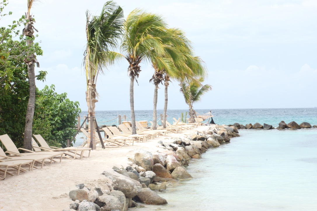 Aruba Travel Journal/ Guide | Flamingos, Best Beaches, Activities, Dining, Caribbean Holiday, Best Beaches in the World | Loveshyla.com