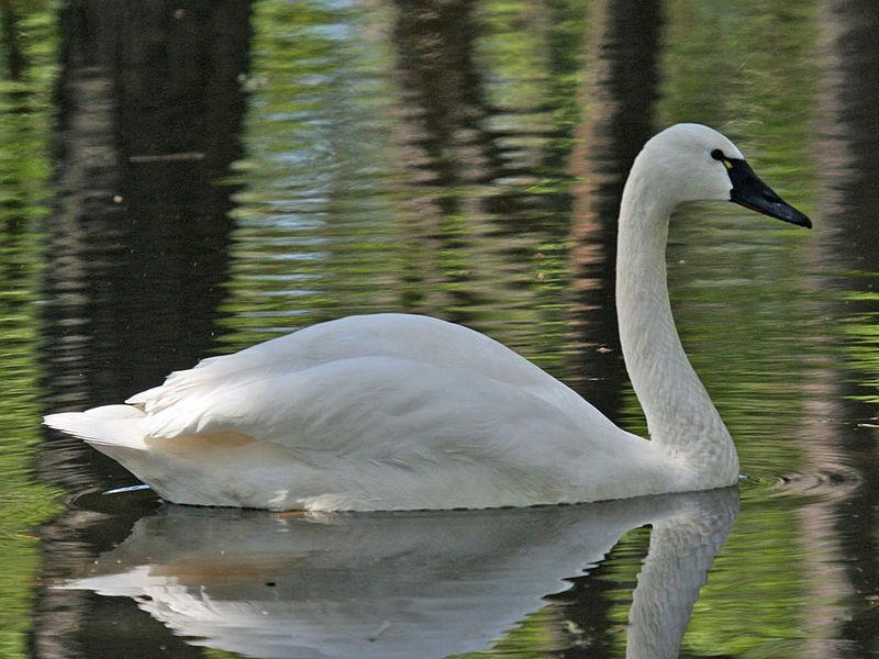 Image by Dick Daniels of Carolinabirds.org
