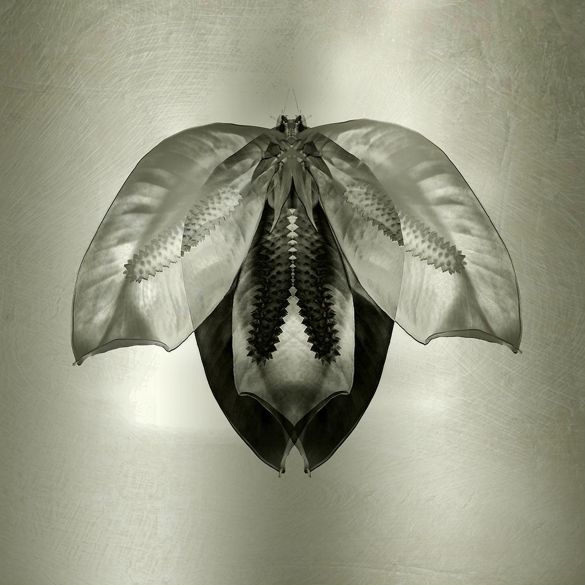 moth   lily petals 5 x 5.jpg