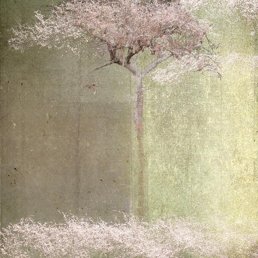 fallen blossoms48x48_smallfile.jpg