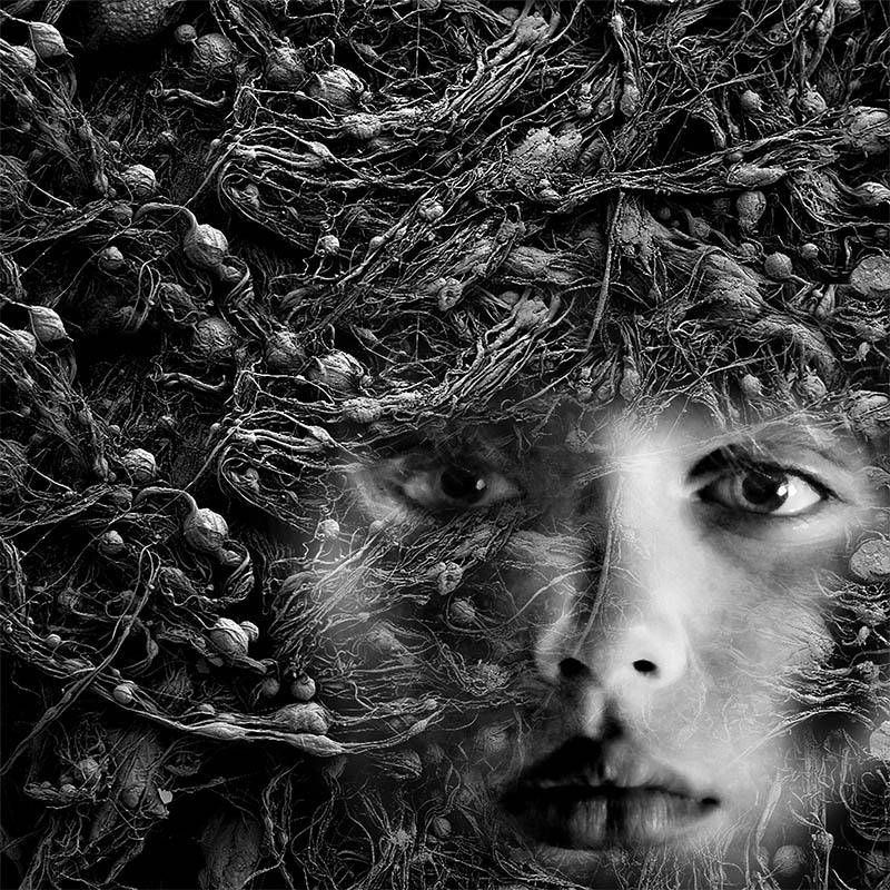 entangled.jpg
