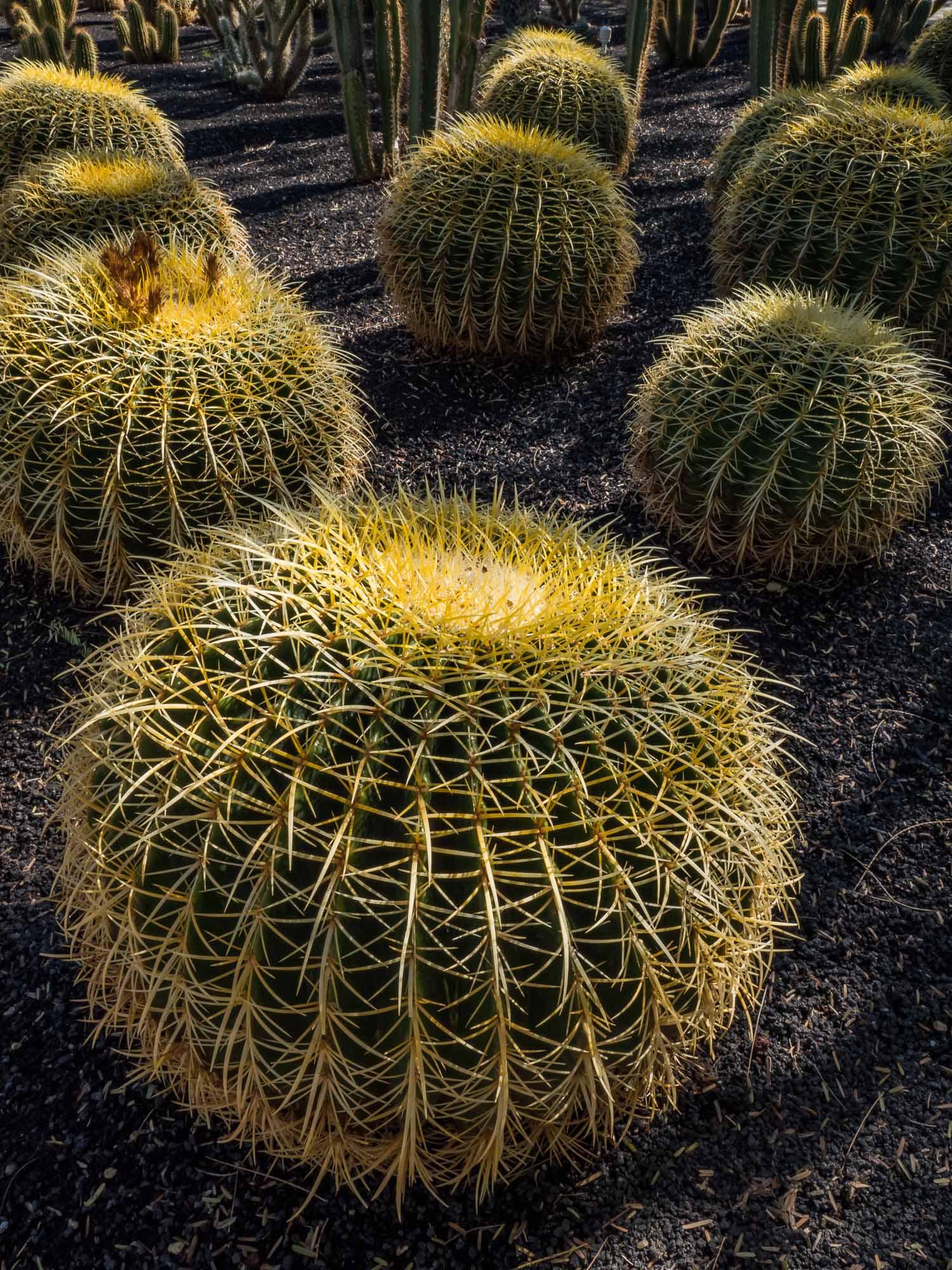 Desert Sights