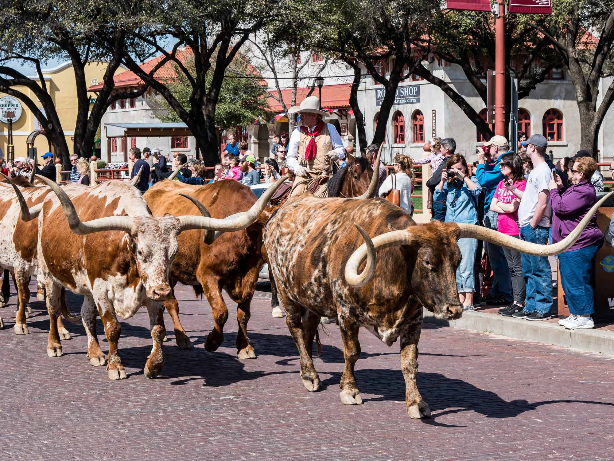Longhorn Parade