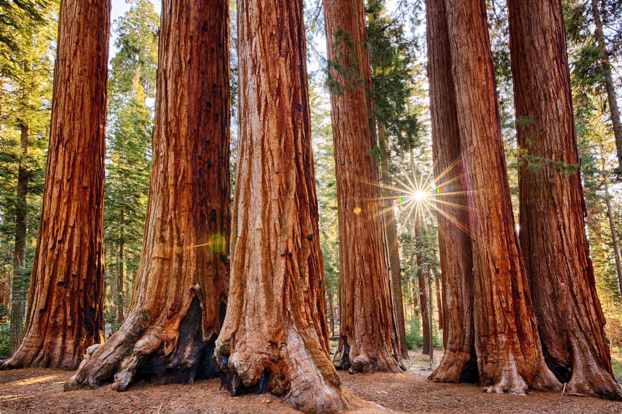 treestrees.jpg