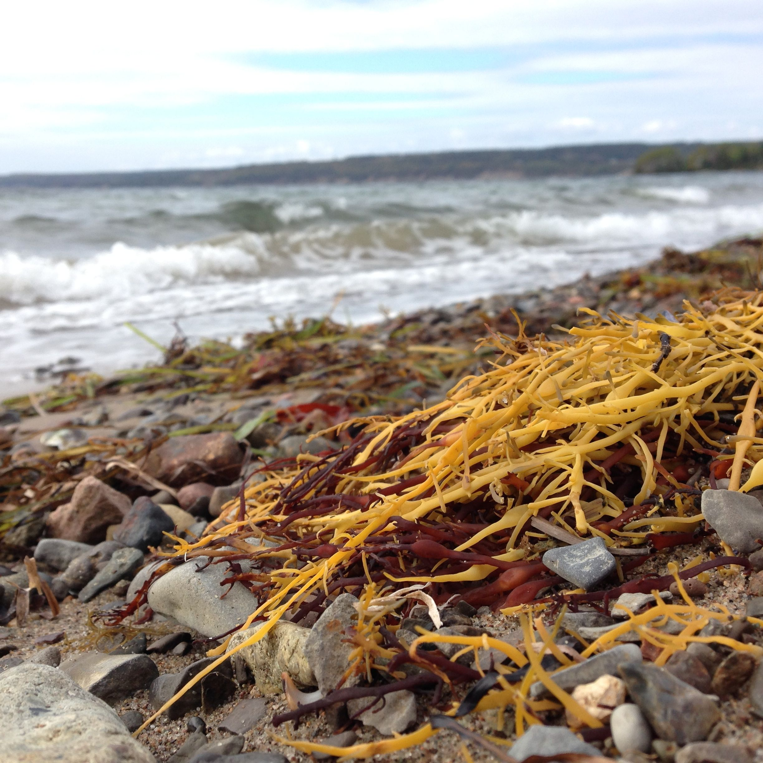 This is at Groves Point, collecting seaweed for my garden, a few weeks ago.
