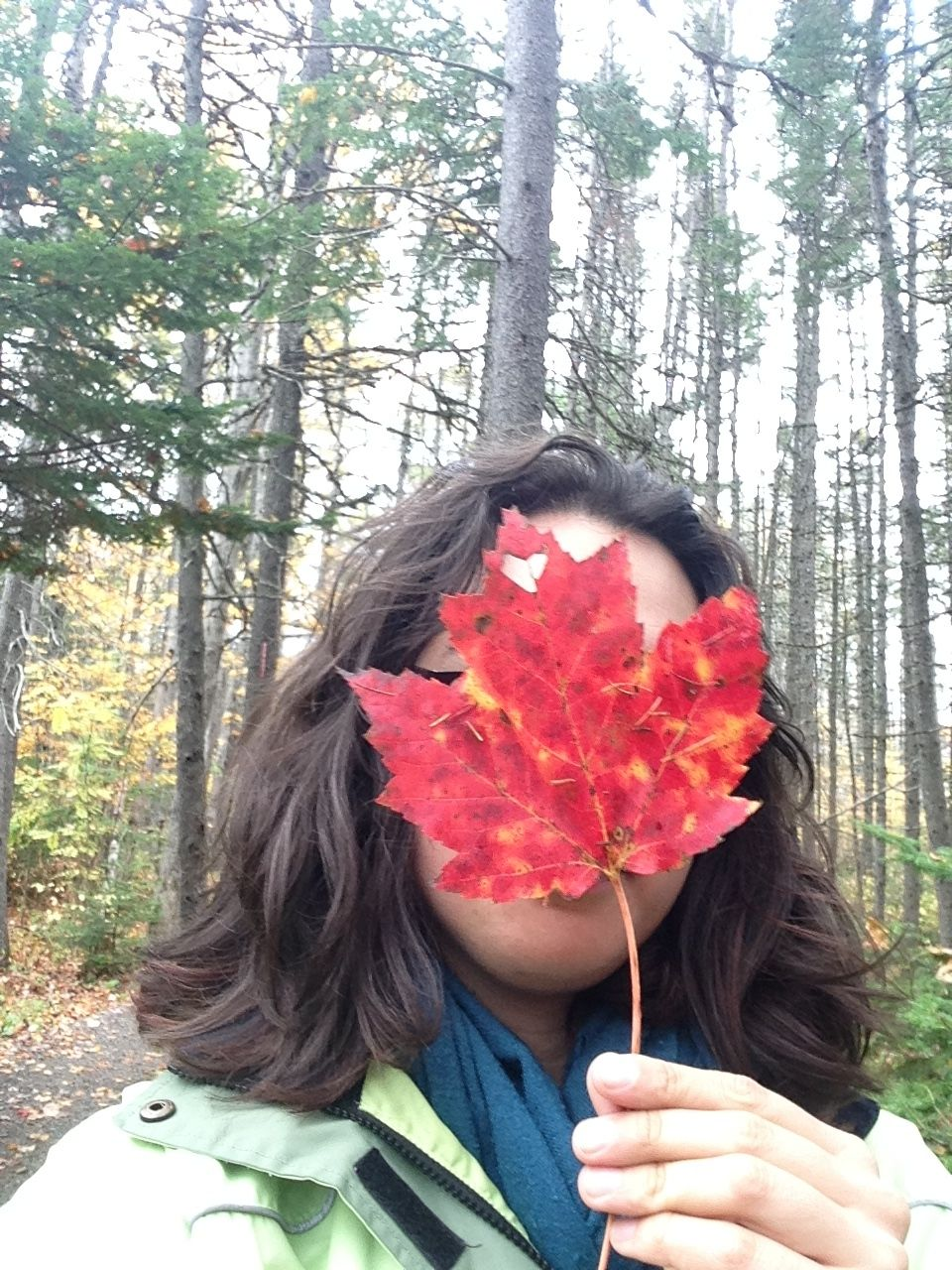 Nature, man. It's the best. That's why hipsters take photos of leaves in front of their faces, right?
