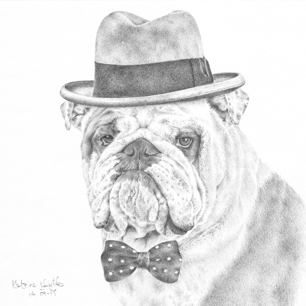 Pencil illustration of Winston the bulldog by Katrina Wight