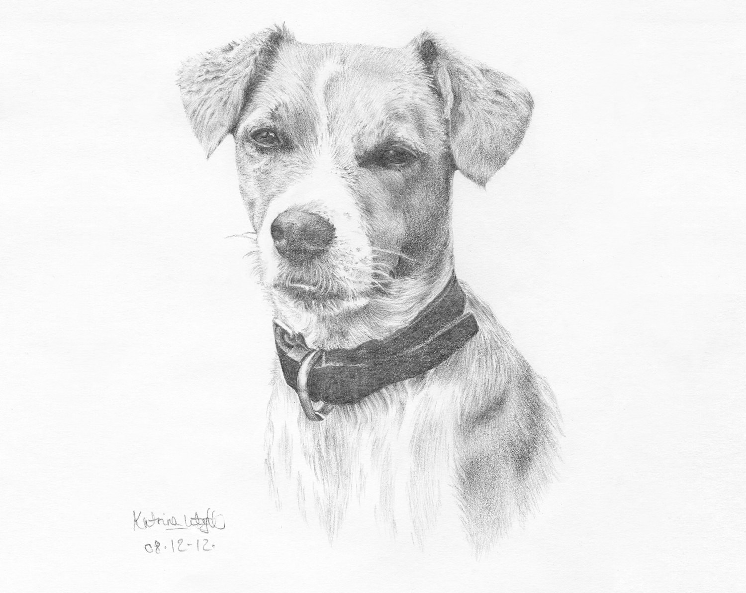 Pencil drawing pet portrait by The Kat and Monocle