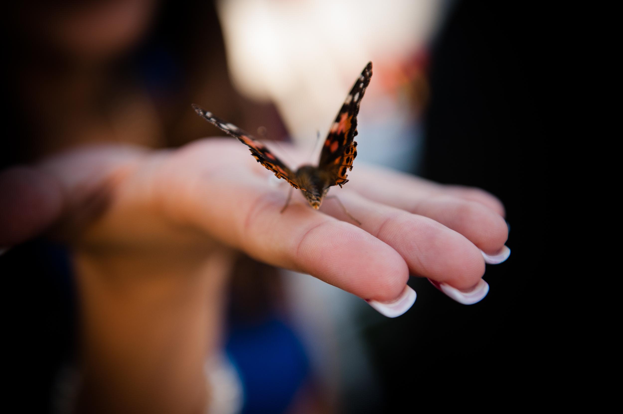 butterflyrelease