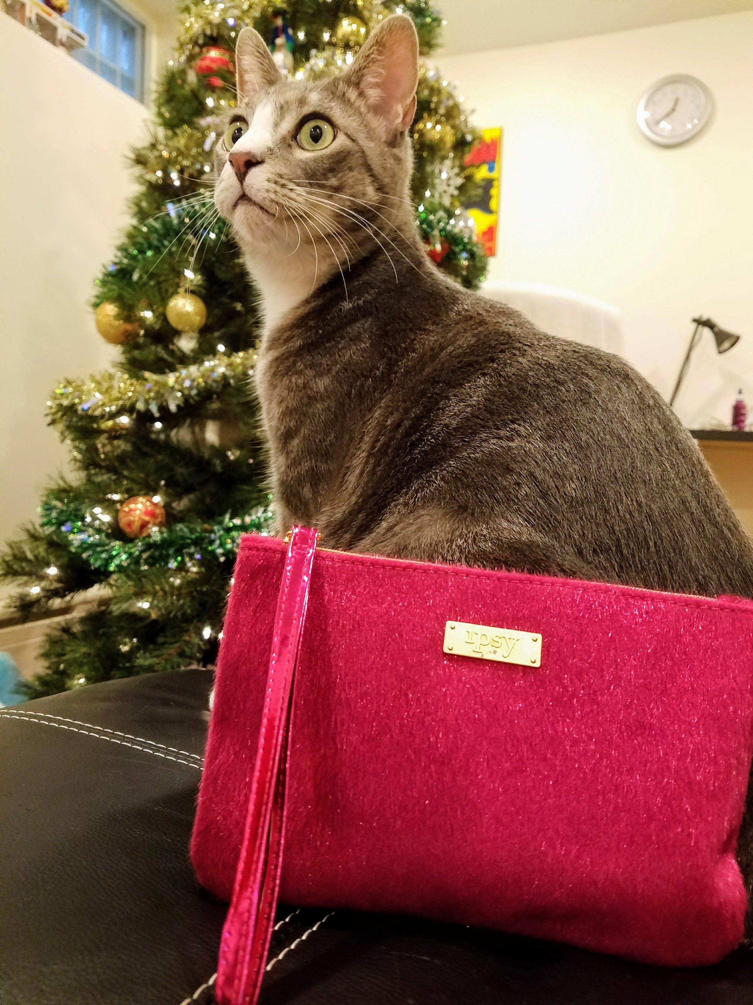 cats love ipsy bag