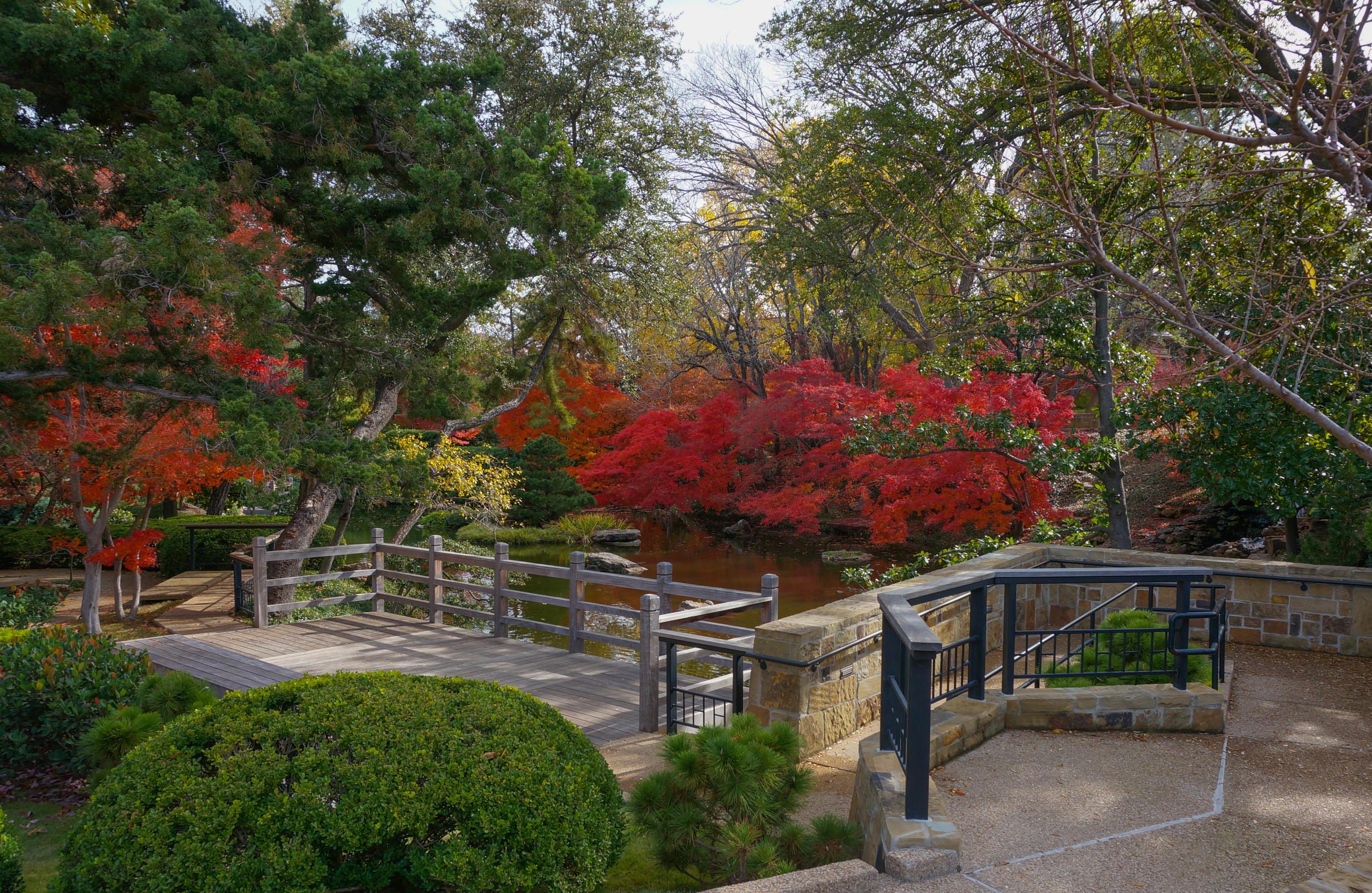 Late November in the Garden