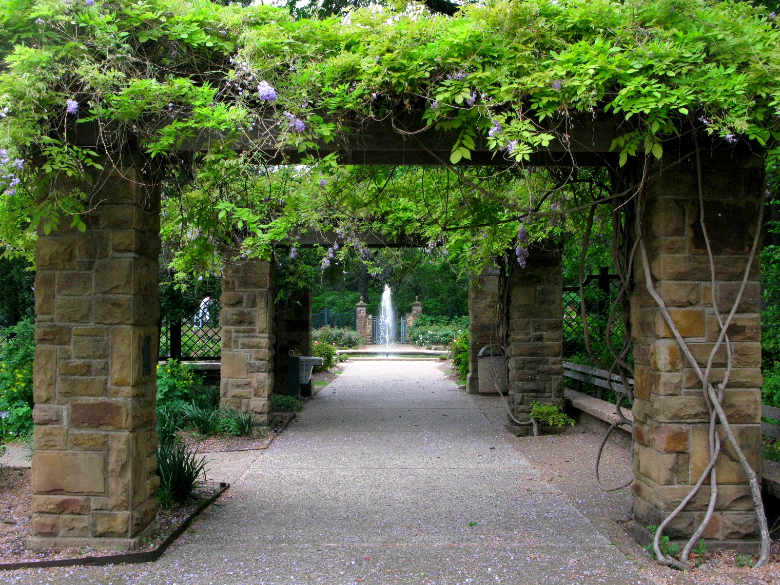 Wisteria covered walkways in the Rose Garden.