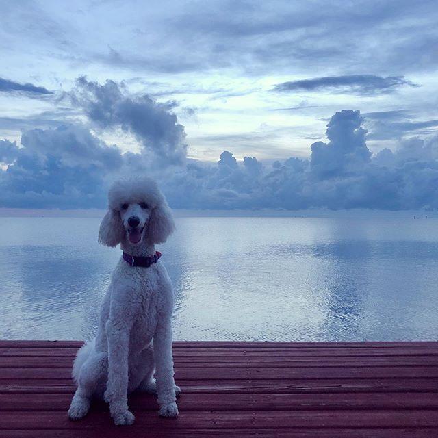 Pippa, big time cloud head