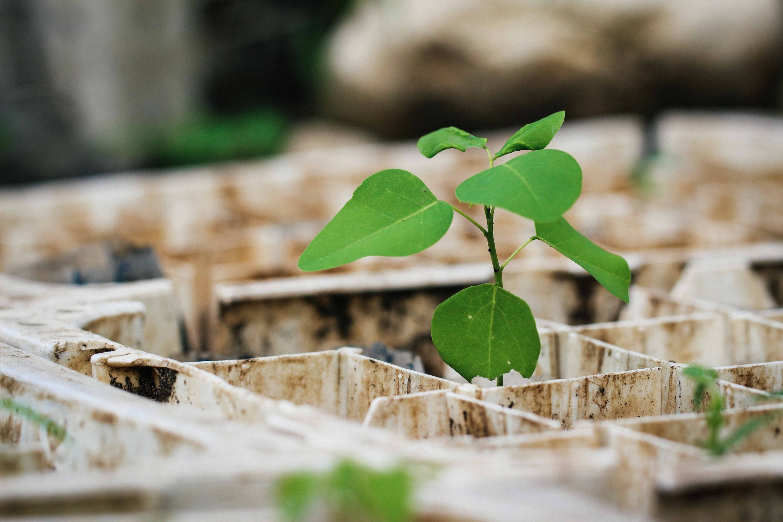 A tree seedling at an MCC-supported tree nursery in Kristan. Ted Oswald.
