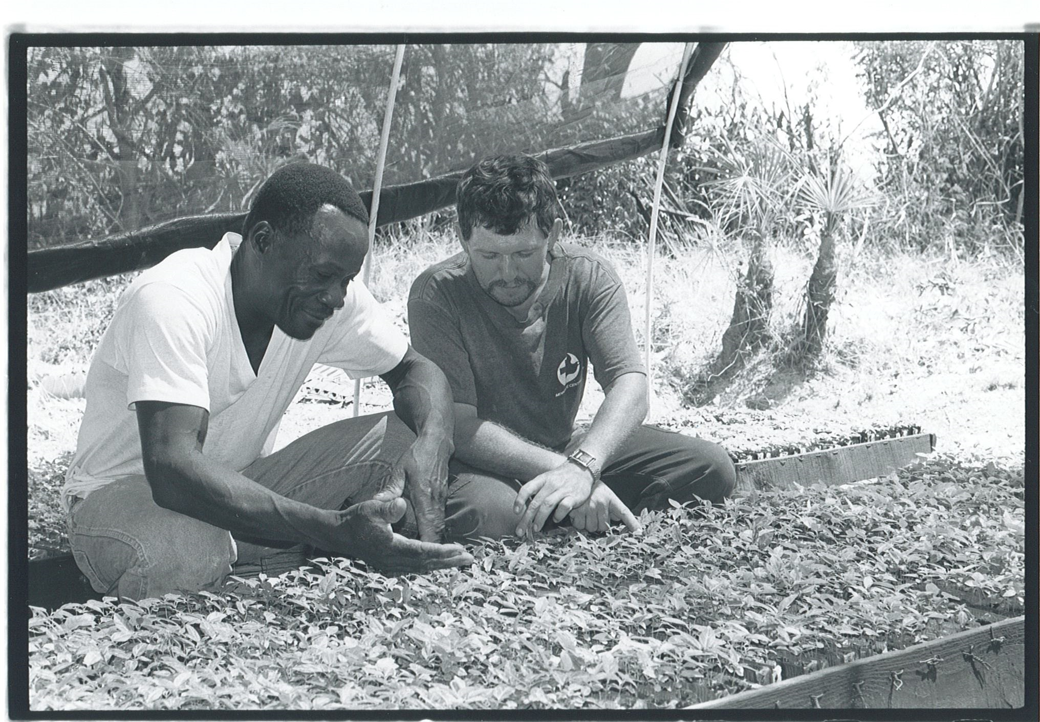 Dieula Colin and Pierre Burkholter examine trees at a nursery near Desarmes in 1989.