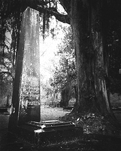 Photo courtesy of Sean Herman and available for purchase at  the Serpents of Bienville Gallery