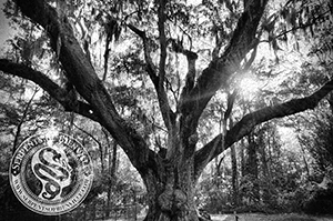 Photo courtesy of Amanda Herman,original photo is available at  The Serpents of Bienville Gallery , in print and postcard form.