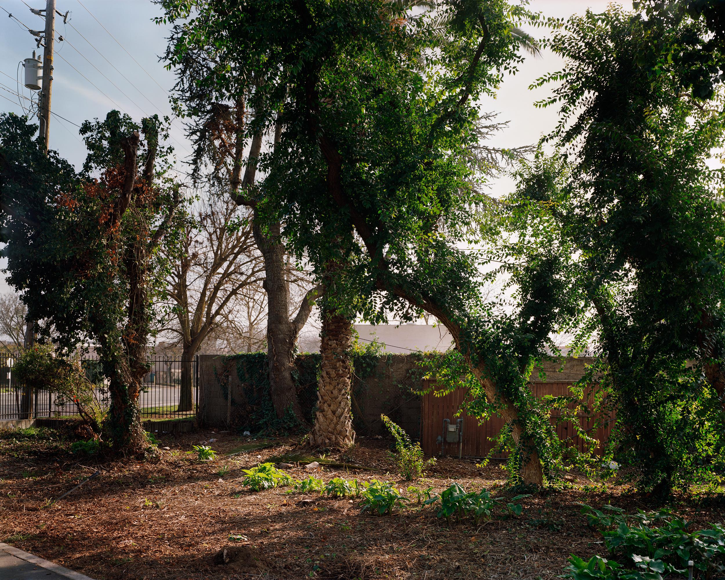 grannys trees book.jpg