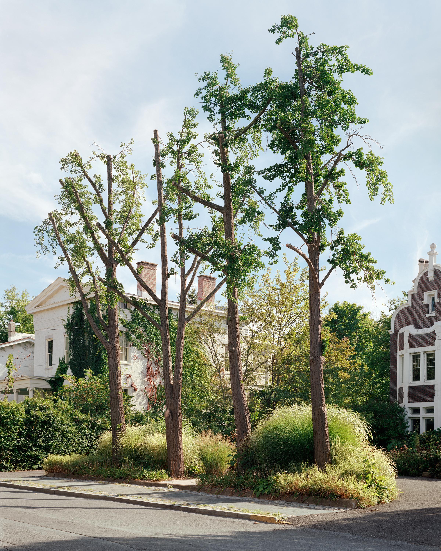 hudson trees book.jpg
