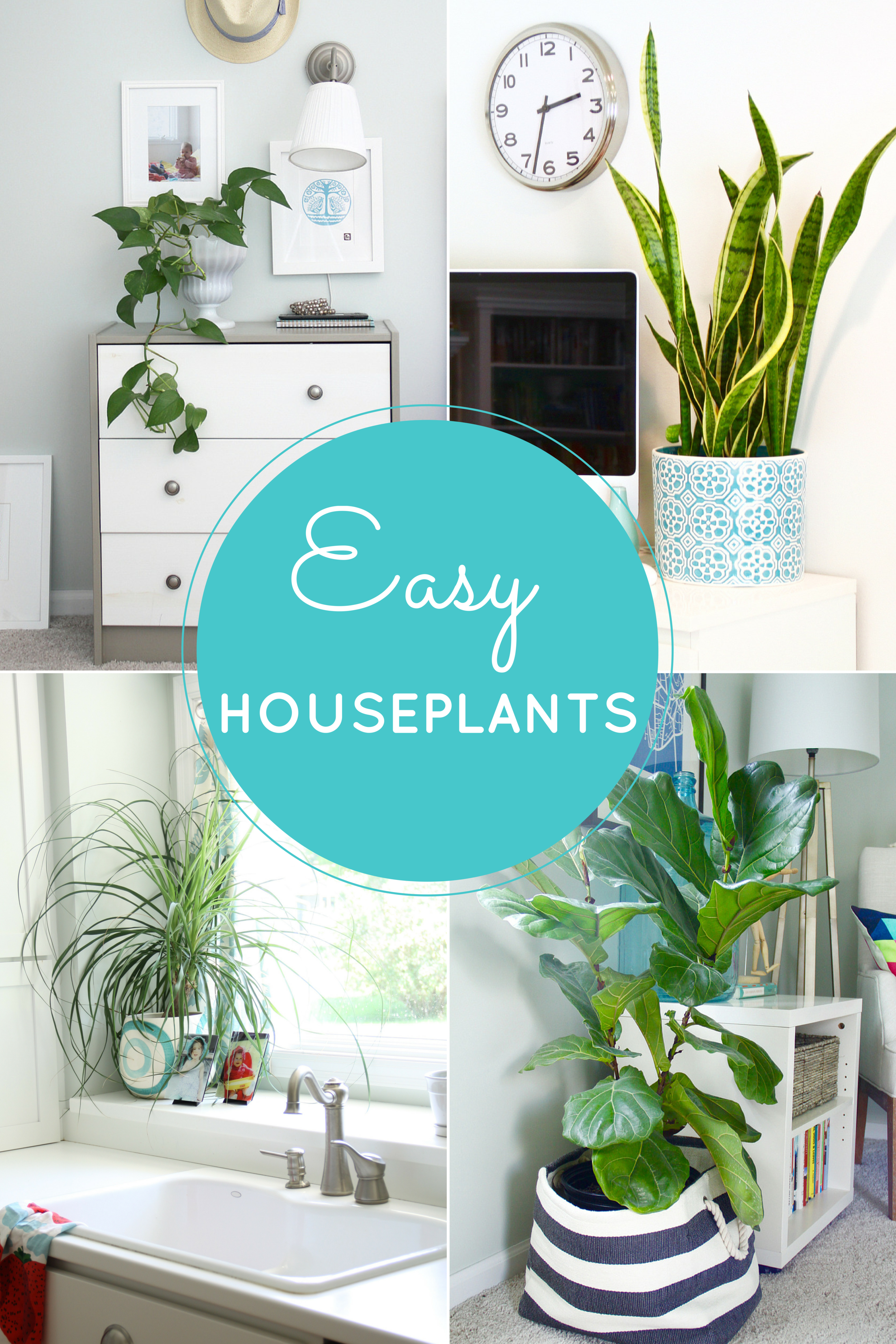 Easy Houseplants: 4 Indoor Plants to Beautify Your Spaces