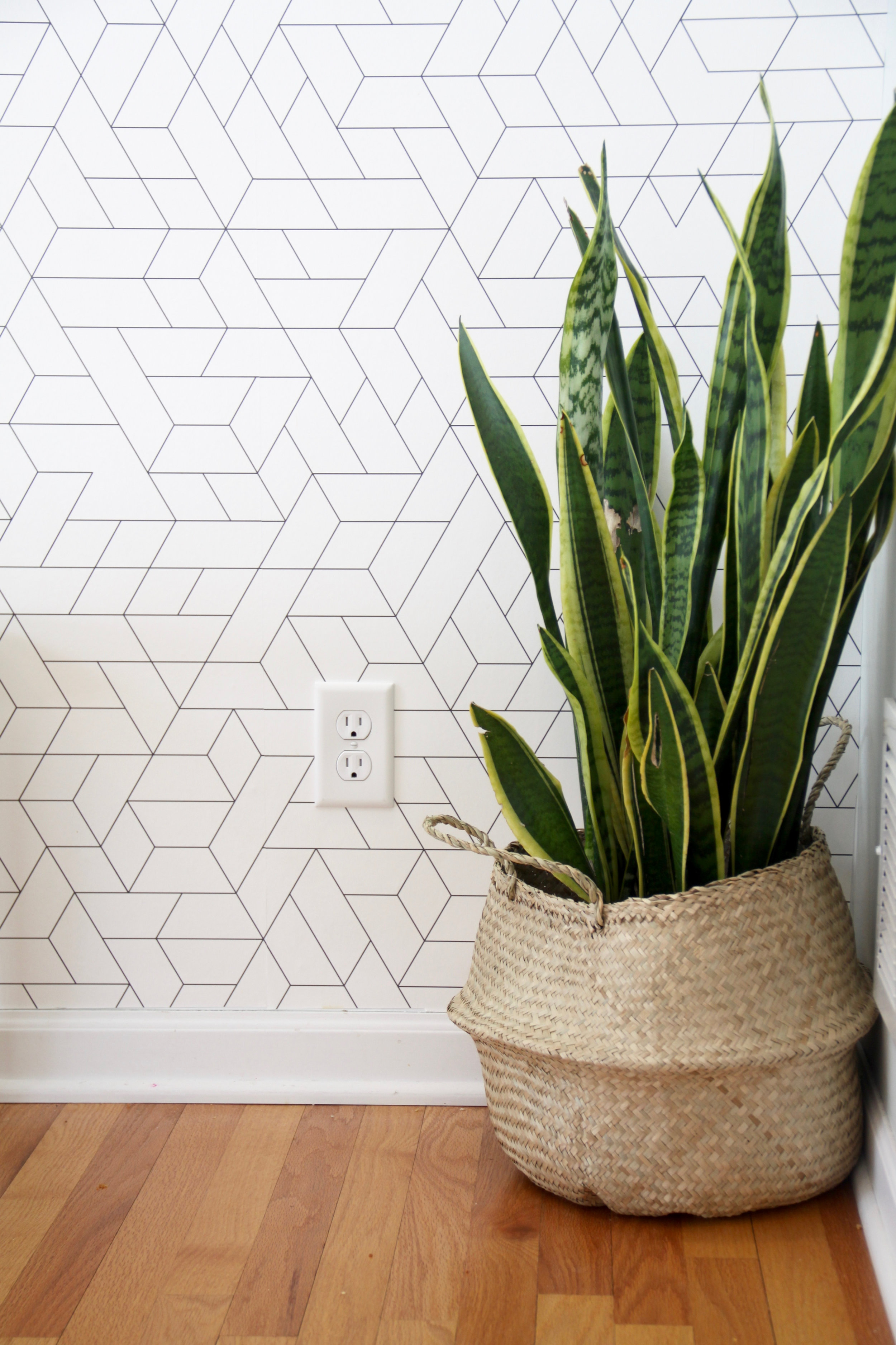 Modern Wallpaper with Snake Plant in Basket