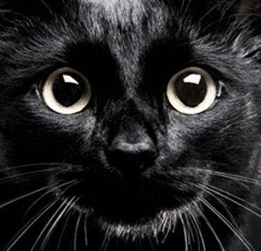 Black-Cat-news.jpg