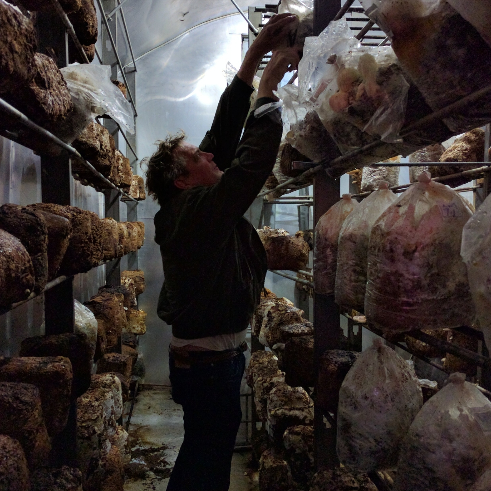 Valley City Fungi - Valley City, OH - John, a self-taught fungiculturist, grows several varieties of organic Shiitake and oyster mushrooms, along with other types of gourmet fungi. These are all grown in his incredible self-built farm, made from shipping containers.