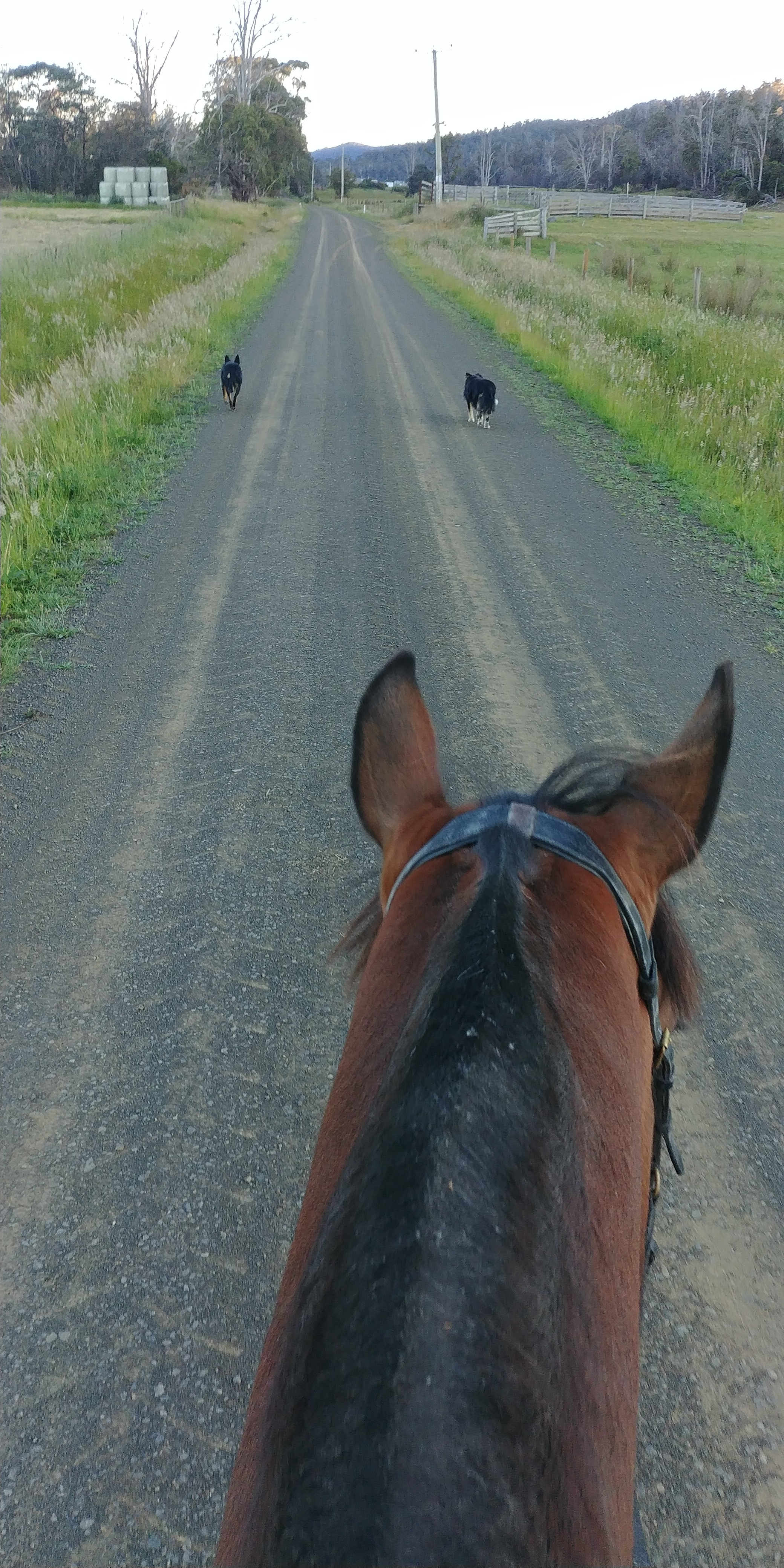 Lots of Country Riding!