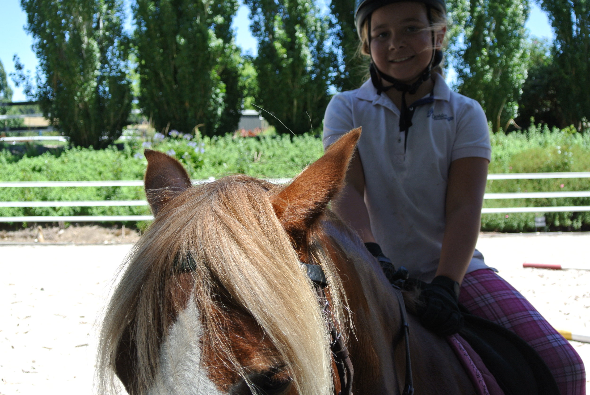 Riding Lessons - $65